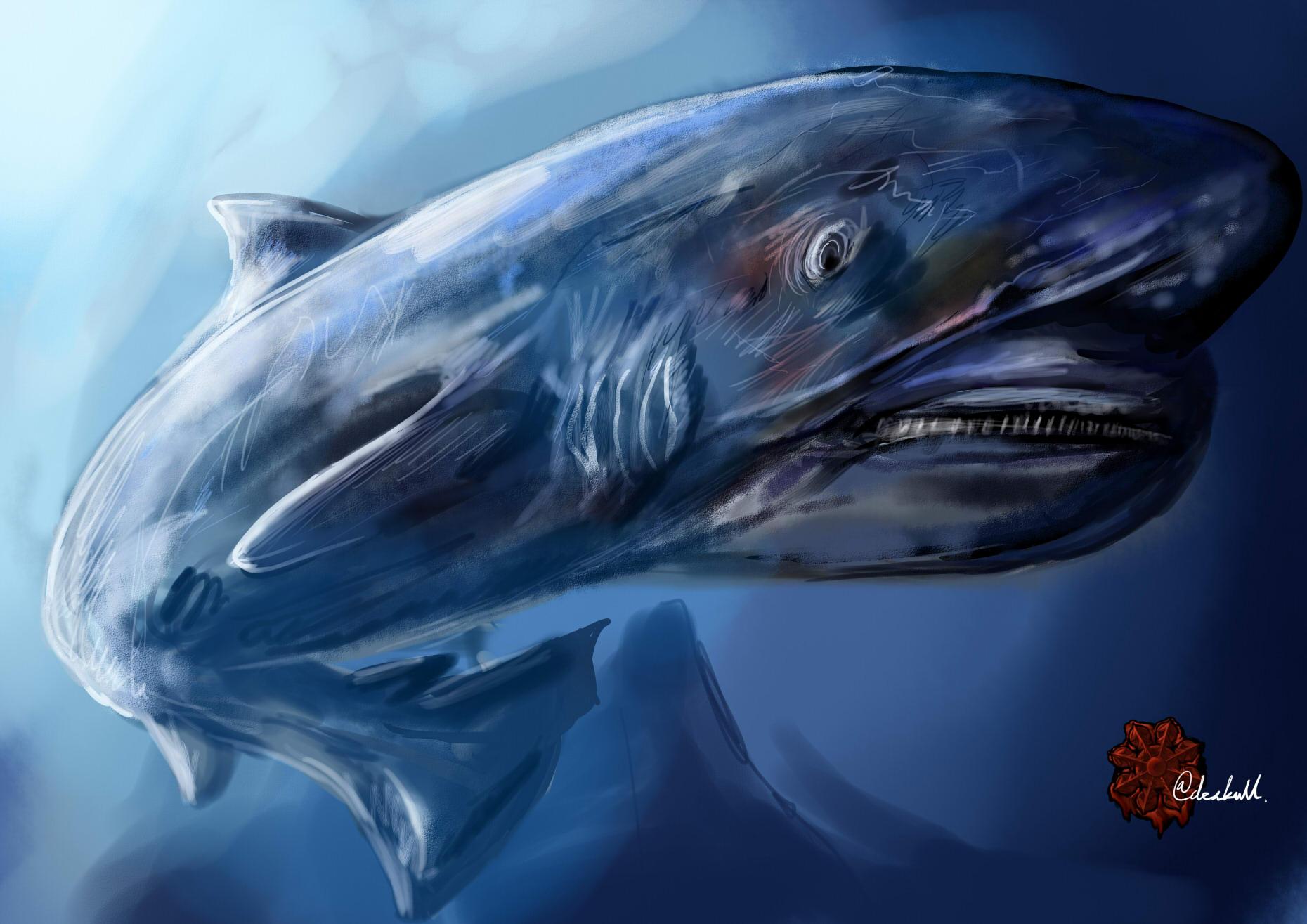 オンデンザメ