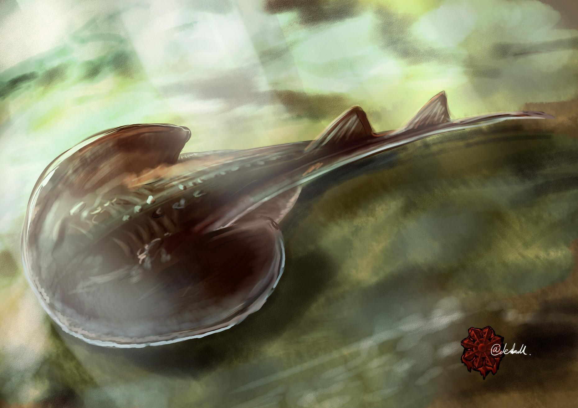 ウチワザメ