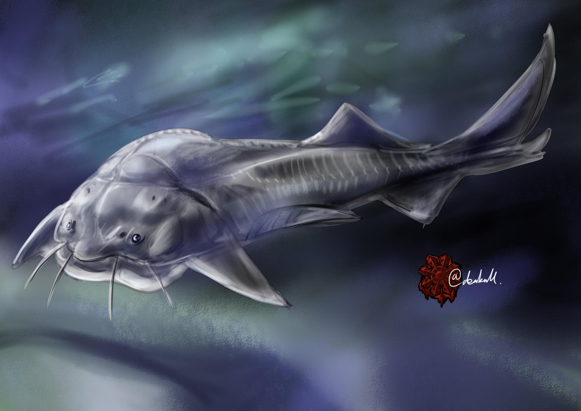 オオチョウザメ