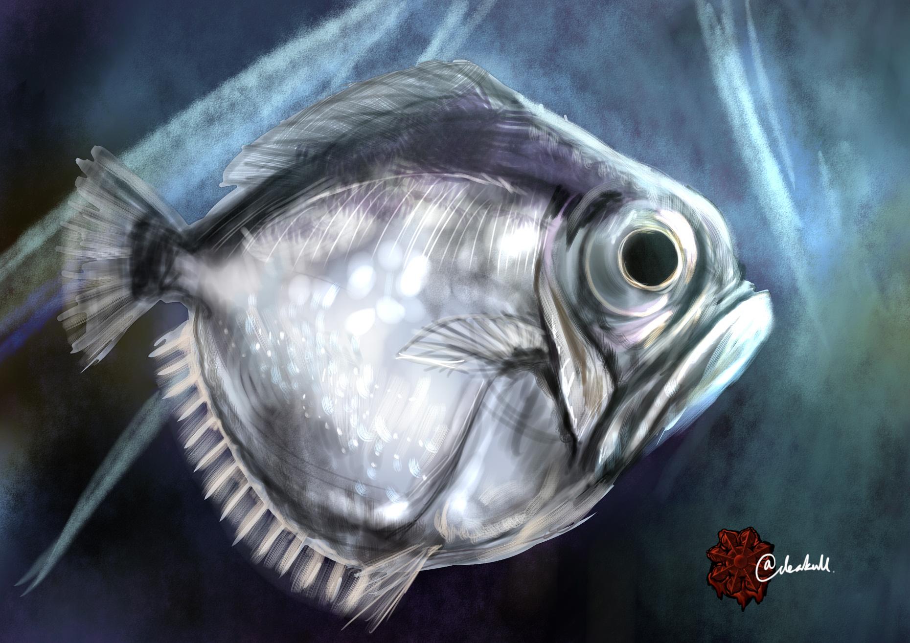 フチマルギンメ