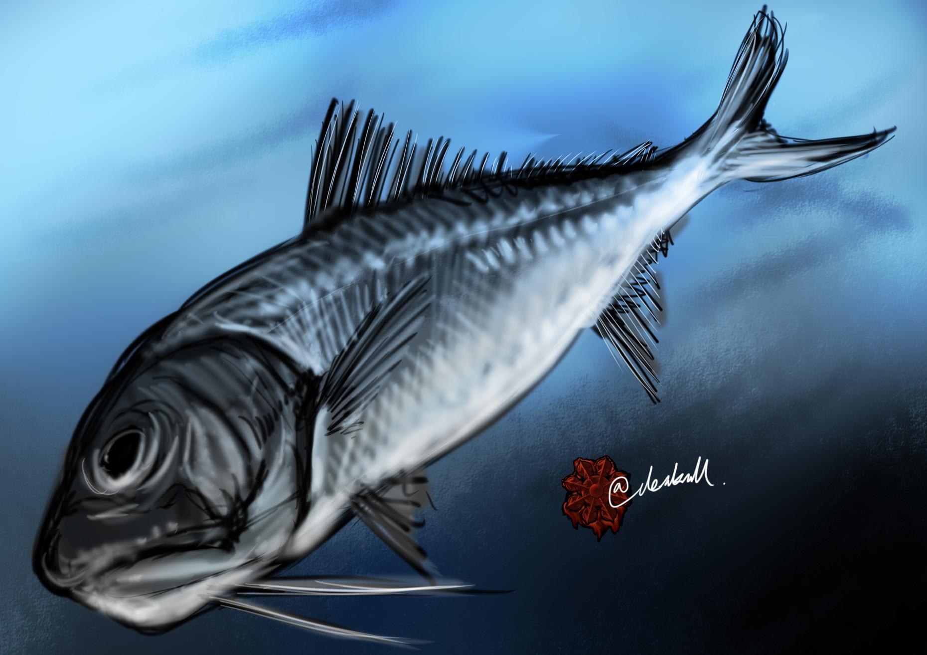 オカムラギンメ