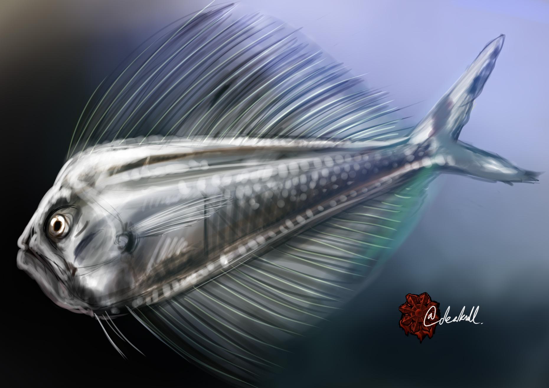 リュウグウノヒメ