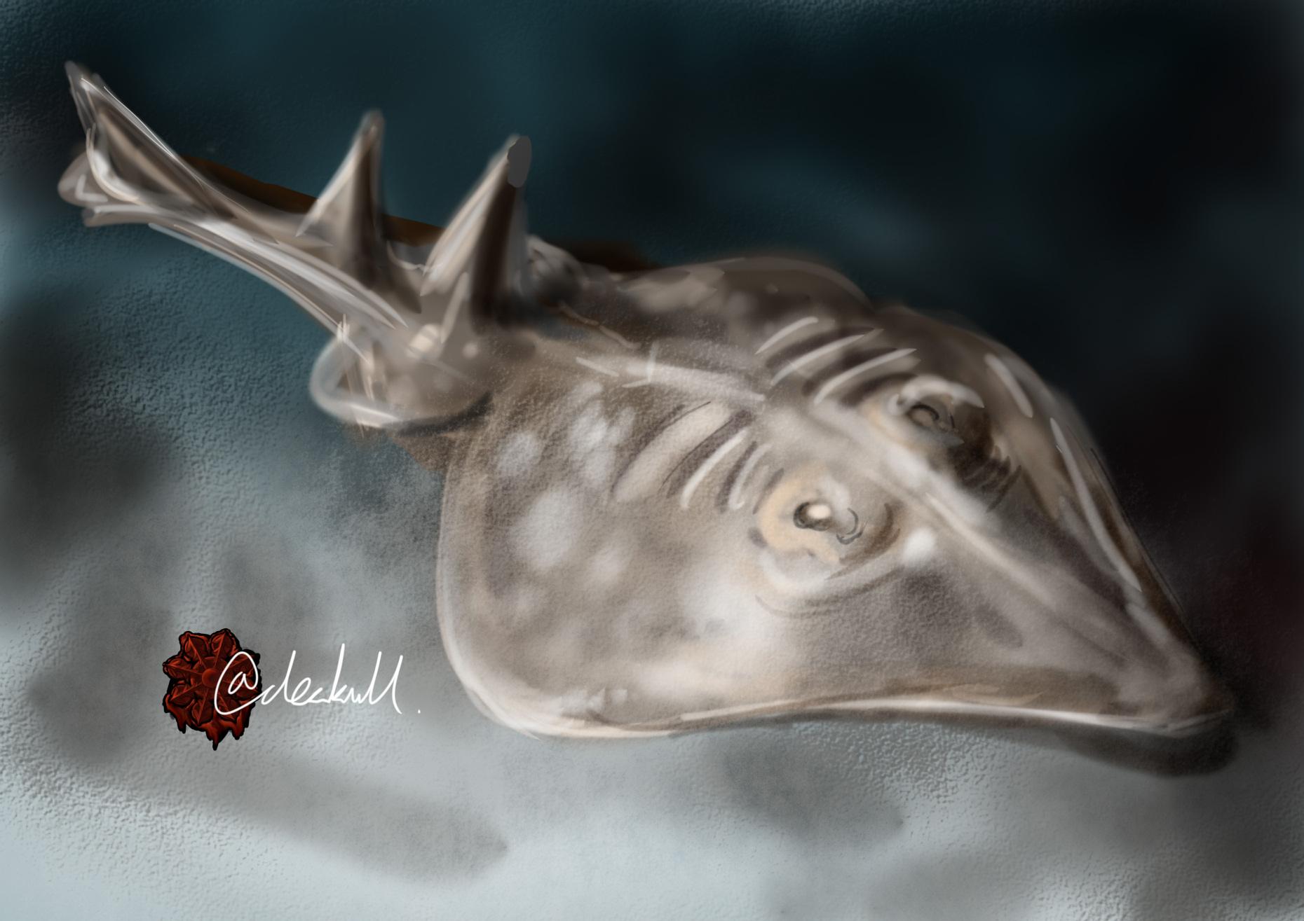 サカタザメ